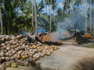 Burning coconut husks