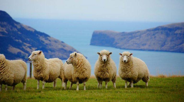 New Zealand Real Estate Market